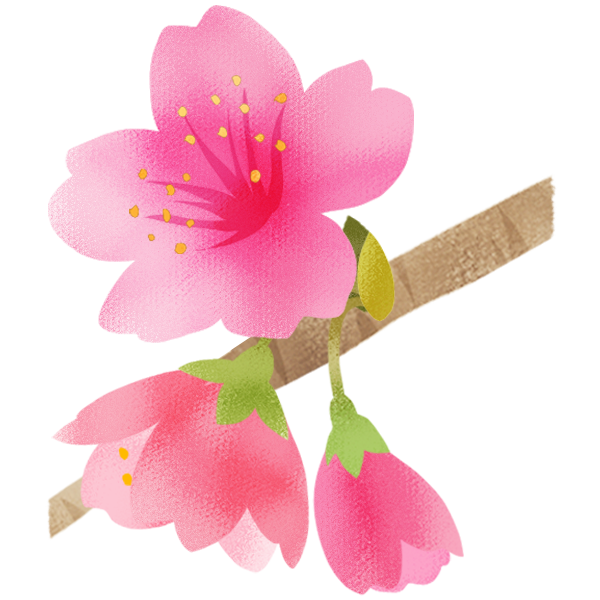 名護の桜  日本で一番早くさくらが開花する沖縄